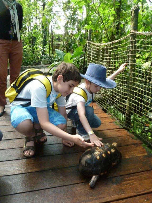 sköldpadda_randers